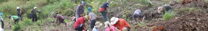 cropped-bushcare-planting.jpg