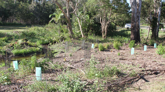 Just one month on from the February working bee, this Dawn Road Reserve regeneration project has brightened the western side of the stream near McConachie Court at Albany Creek