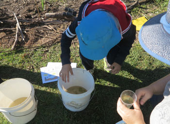 Buckets proved handy for collecting samples of Dawn Road Reserve stream water