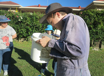 Peering into a bucket with samples of aquatic invertebrates