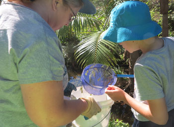Volunteers used nets and buckets to collect and document aquatic invertebrate specimens during the May Bushcare activity in the Dawn Road Reserve