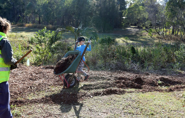 Watched over by Moreton Bay Regional Council Bushcare officer Wendy Heath, this young volunteer demonstrates his skill with a barrow full of mulch.