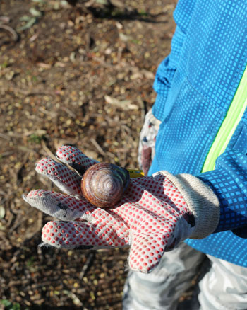 Among a number of found objects this month was this snail and a handful of golf balls (candidus pilamalleus