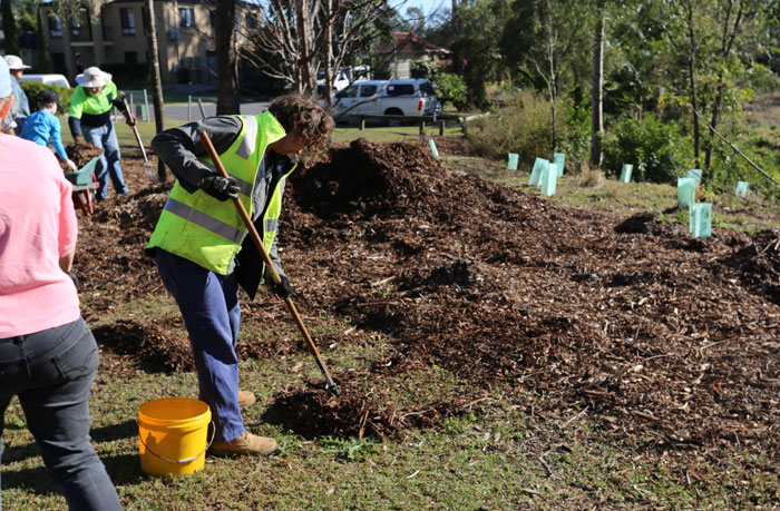 Moreton Bay Regional Council Bushcare officer Wendy Heath rakes out mulch to form an edge to the revegetation zone. This helps demarcate the sensitive areas so mowing contractors do not mow over the young plants