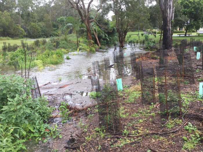 Our usually quiet stream that runs along the western edge of part of the Dawn Road Reserve was transformed by flooding rains, but the plantings along its banks held firm.