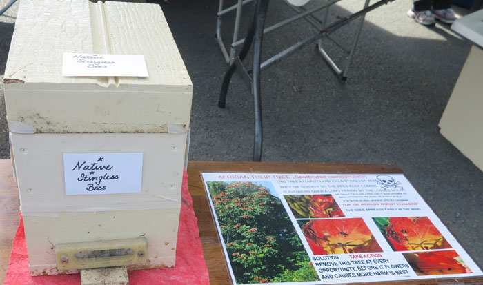 The native bee hive, just one week old, fascinated the children and adults who took a look inside at the Albany Hills State School fete