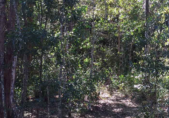 Dawn Road Reserve understory plants. Pic: Trina McLellan