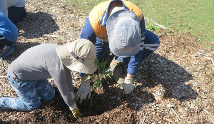 An Albany Hills State School student gets a hand from Dad as they add another new plant to the revegetation zone.