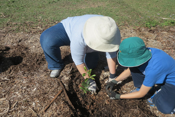 Then is was this Albany Hills State School student's turn to help his Mum plant a shrub.