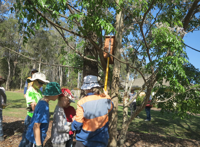 After the planting was done, the Albany Hills State School students were fascinated as Dawn Road Reserve Bushcare group patron Janet Mangan demonstrated a clever way to remotely view what is going on inside a nesting box with a handheld monitor connected to a camera mounted on an extension pole.