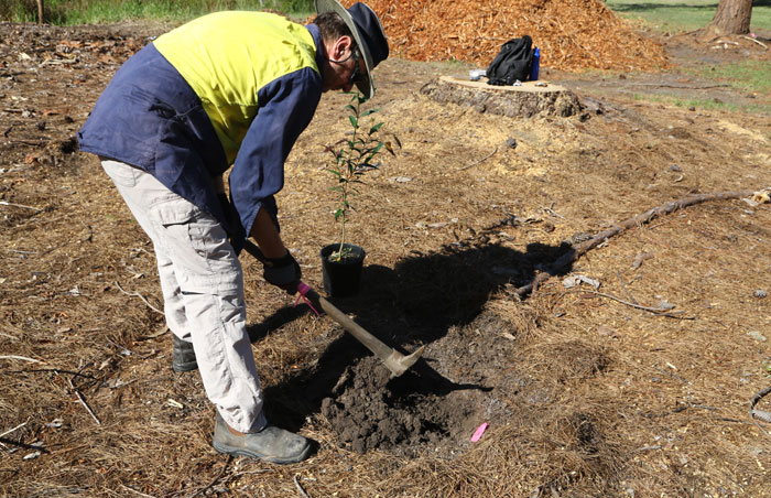 Preparing the recently cleared ground was hard work in places, especially where there were heavier clay soils that hadn't absorbed enough moisture, but the Dawn Road Reserve volunteers were undaunted.