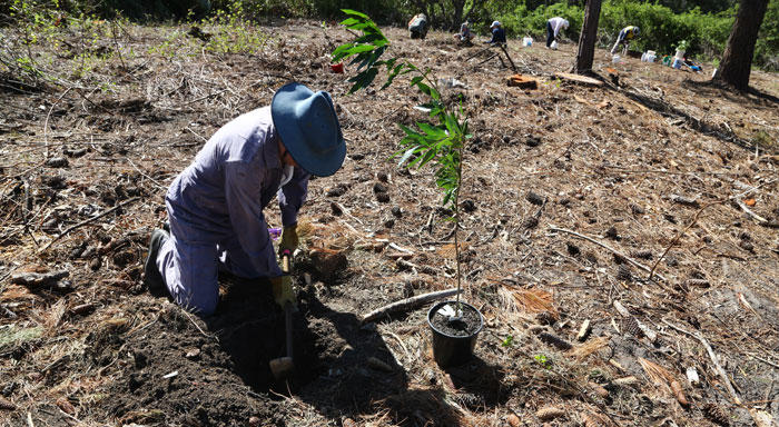 After tackling the heavier clay soil, longtime volunteer Gary replants one of the faster-growing tree species that will help provide a visual barrier into the future.