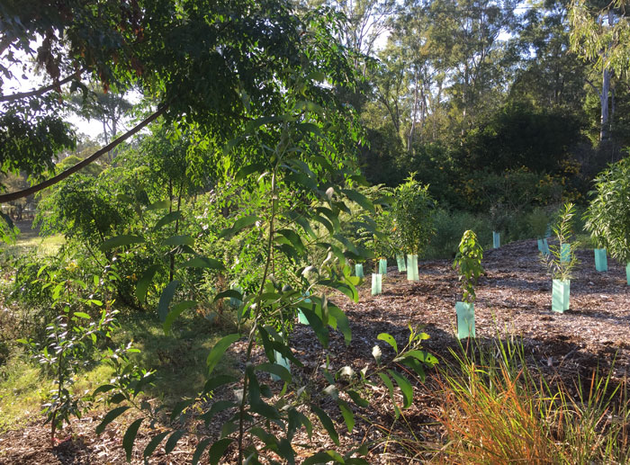 The view from the western edge of our southern-most planting in the original Dawn Road Reserve regeneration patch