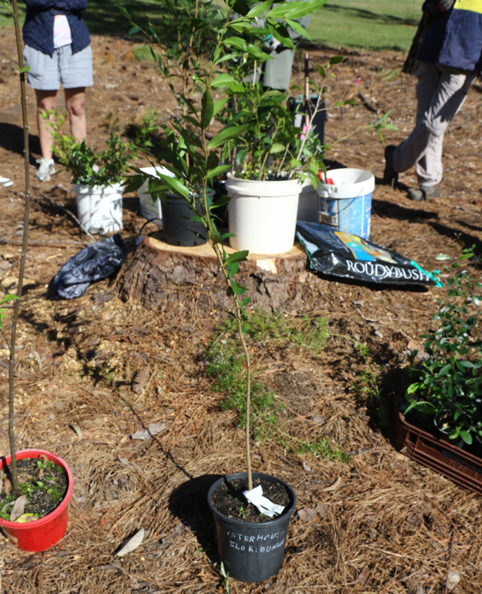 A selection of fast-growing native trees and understory shrubs awaited planting in the Dawn Road Reserve's new revegetation patch.