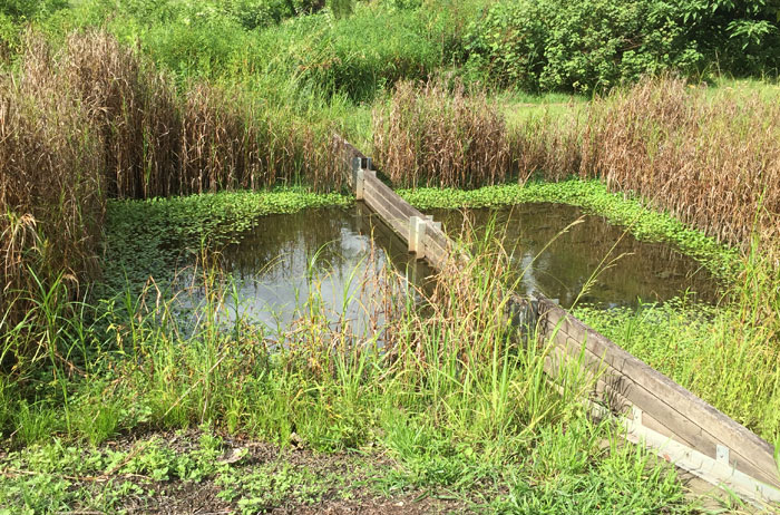 Because stormwater and domestic runoff head down towards the stream running through the revegetation sites, this filtration pond helps keep larger debris from fouling the waterway