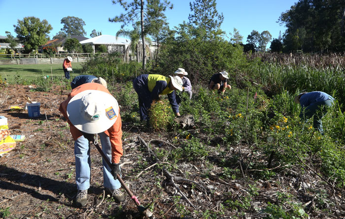 All hands to the tools as the Dawn Road Reserve Bushcare volunteers work on the second revegetation area