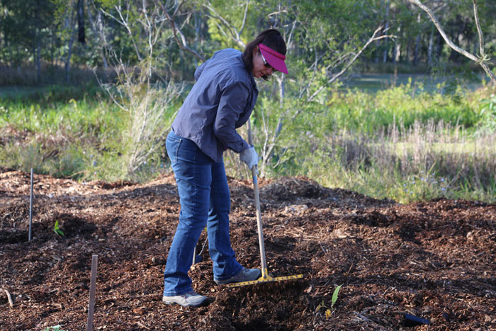 Spreading the mulch among the plantings was one of the tasks during this Dawn Road Reserve Bushcare working bee.