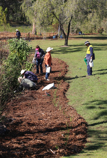 Many hands do make light work, as these keen Dawn Road Reserve Bushcare volunteers proved in August, completing mulch spreading, edge planting and more