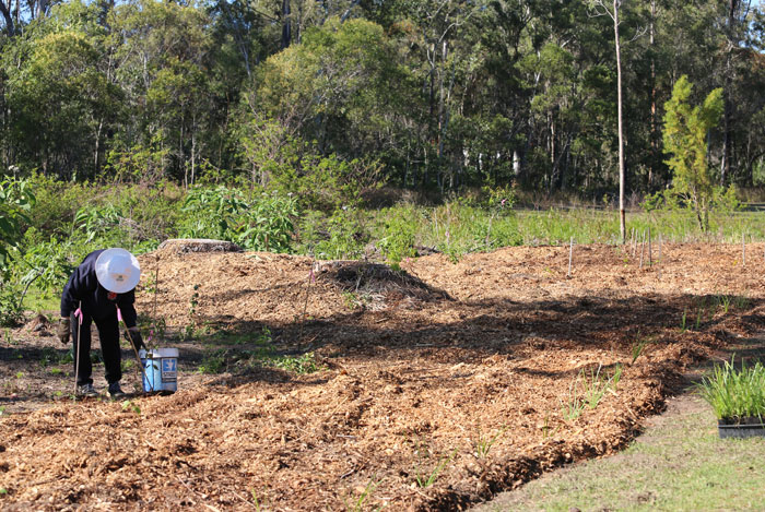 Dawn Road Reserve Bushcare volunteer Margaret places a bamboo stake next to a freshly planted young tree