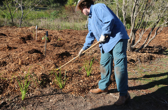 Volunteer Michael helps drag some of the mulch through to the front of the revegetation patch. Pic: Trina McLellan
